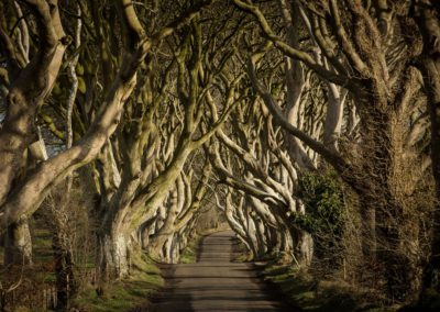 Game of Thrones Film Location The Dark Hedges